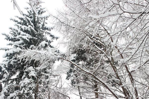 Снежная зима в феврале 2018