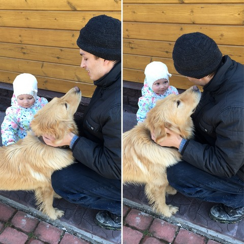 Ребенок и лабрадор