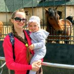 Лошадь в зоопарке